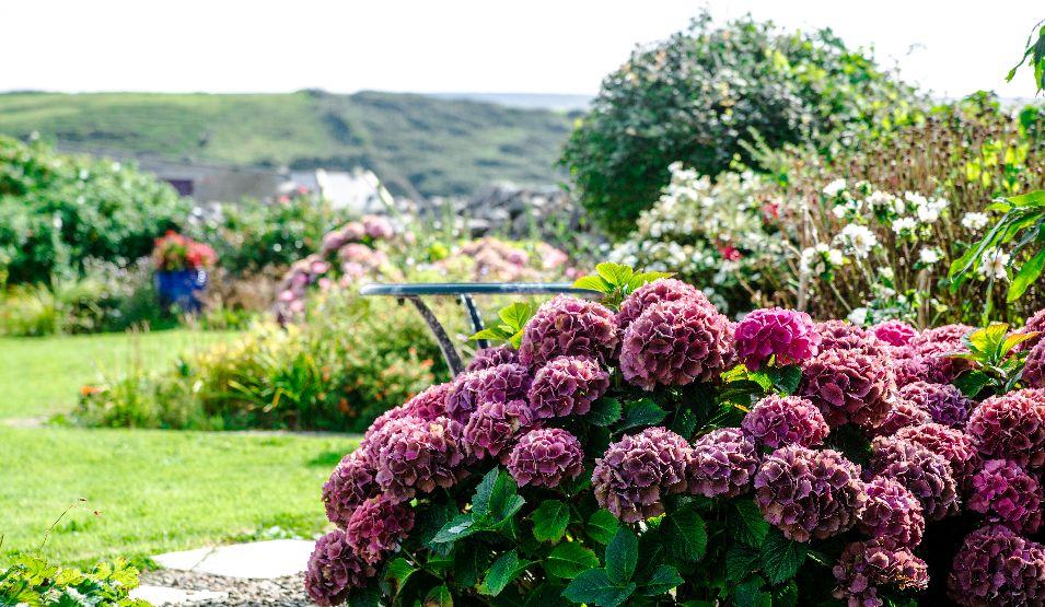 Garden at Daly's House, Doolin, Co. Clare, Wild Atlantic Way
